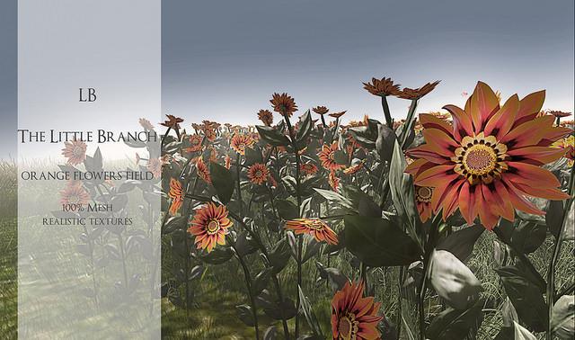 lb-orange-flowers-field