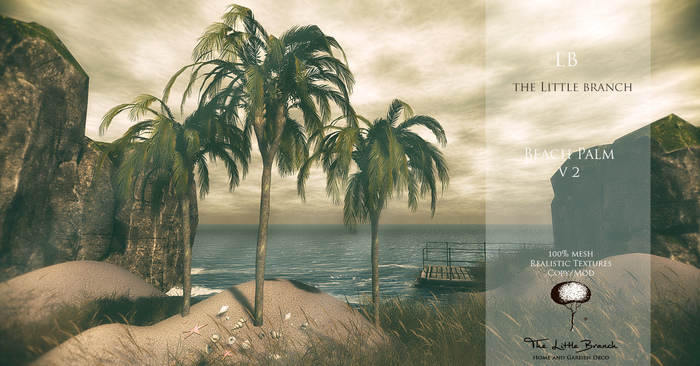 lb_beach_palm_v2