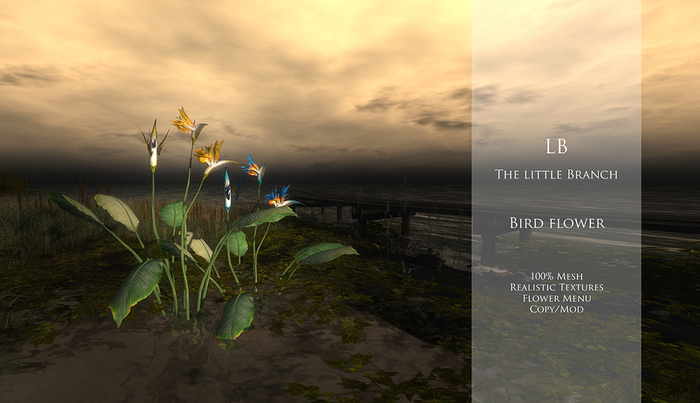 lbbirdflower