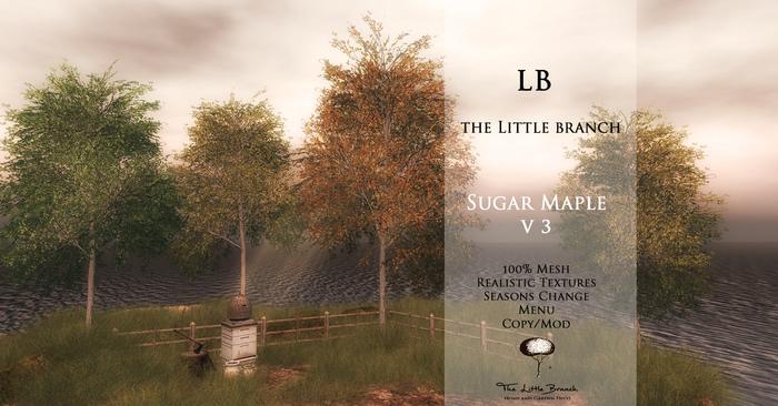 the_little_branch_sugar_maple_v3